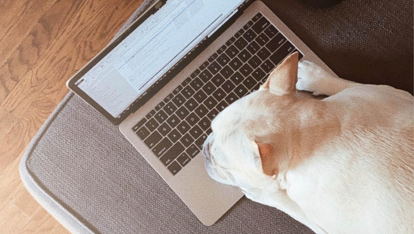 thingst-do-do online-denver